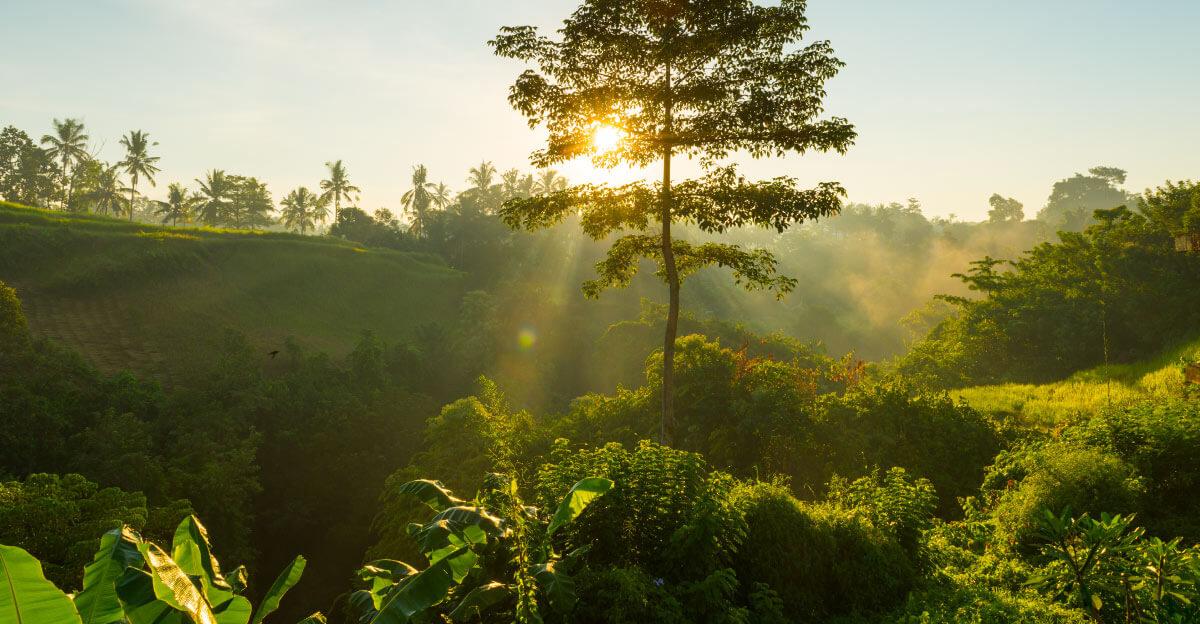 Les engagements environnementaux de Polytropic