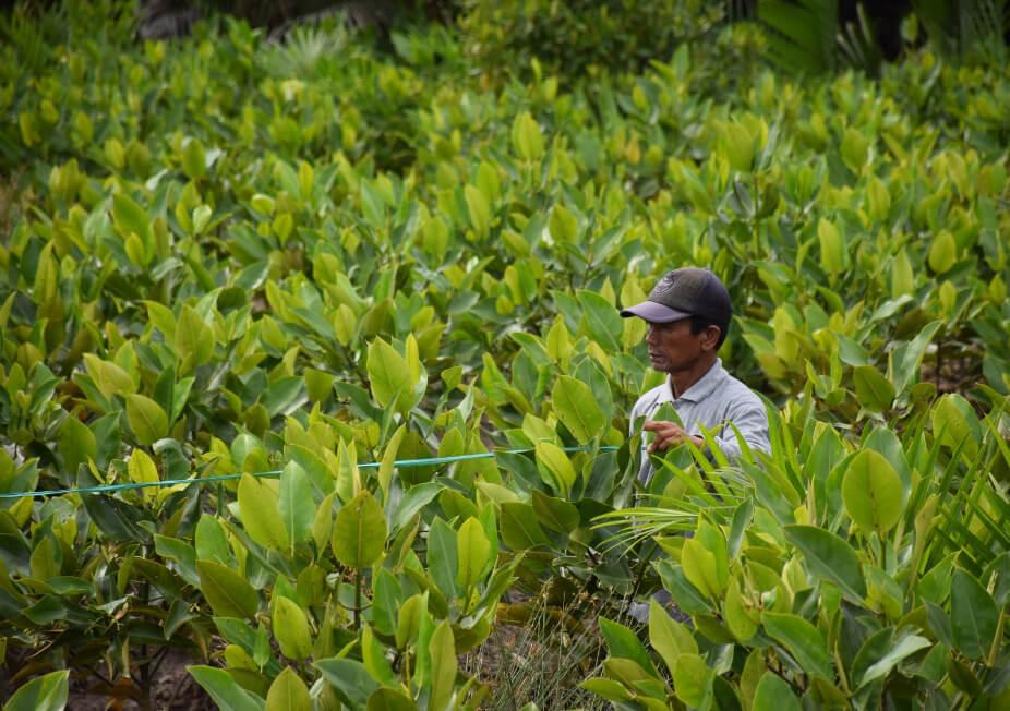 Projet MAHAKAM Restauration de mangrove et développement local